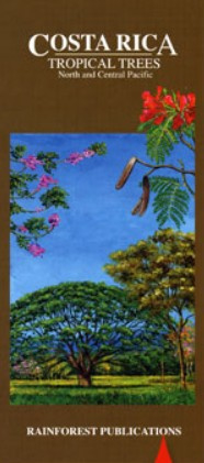 Arbres exotiques de Costa Rica