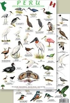 Perú - Aves de zonas costeras y humedales