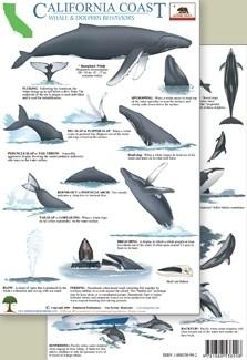 California - Comportamiento de ballenas y delfines