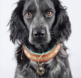 Dog With A Mission DWAM halsband Tiger Lily   2,5cm 4cm