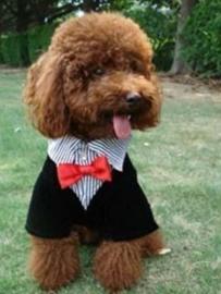 Honden trouwpak / feestelijk kostuum | XS, S, XL
