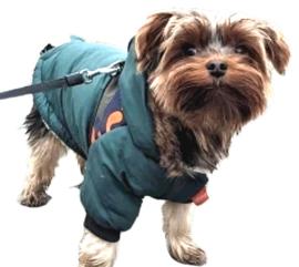 DRESSPET Stoere hondenjas / winterjas hond | groen | M, L, XL