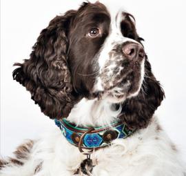 Dog With A Mission DWAM halsband Boho Juan 2,5cm