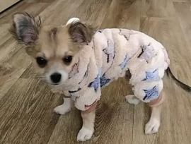 Honden Pyjama / Onesie | XS, S, XL, XXL