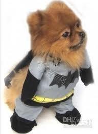 honden kostuum Batman |  |XS