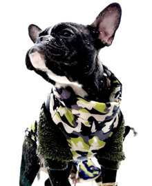Camouflage bodywarmer | groen/grijs | S, M, XL