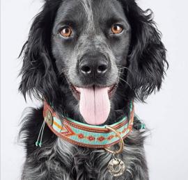 Dog With A Mission DWAM halsband Paddy Lee | 2,5cm 4cm