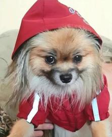 Regenjas hond   THE DOG FACE, PUPREME   M