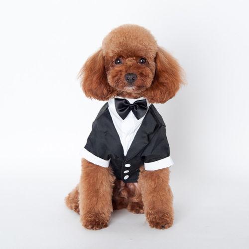Colbert / trouw kostuum / trouwpak hond    S, M, L, XXL