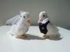 Bruidsduifjes (klantenfoto)