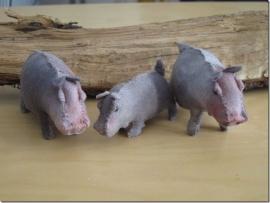 Nijlpaarden (klantenfoto)