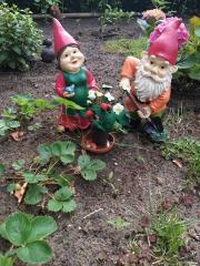 Aardbeienplant (klantenfoto)