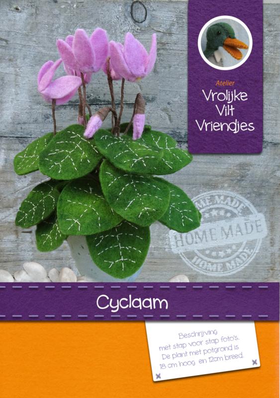 Cyclaam