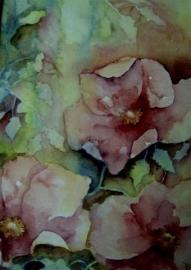 Rose wilde roos