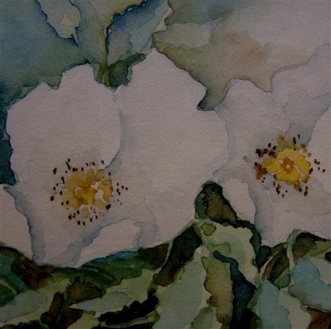 Witte wilde roos