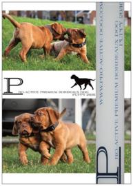 BORDEAUX DOG PUPPY PREMIUM INHOUD 15 KG