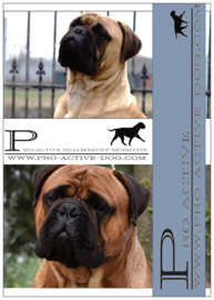 PRO-ACTIVE BULLMASTIFF SENSITIVE 15 KG (GEPERST)