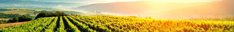 wijn per land en streek