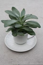 "Plantenpot ""kop&schotel"" wit"