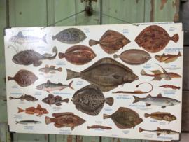 Vintage schoolplaat zeevissen