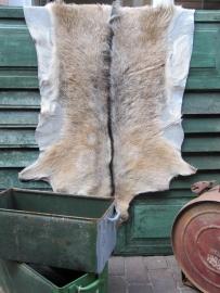 Grote dierenhuid bruin met wit