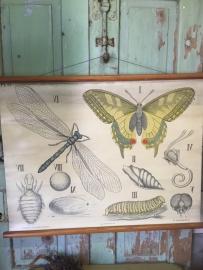 Oude schoolplaat op linnen