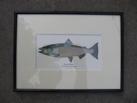 Leuke lijstje met afbeelding van King Salmon