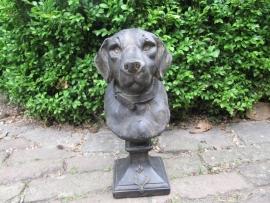 Labrador Buste