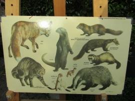 Oude schoolplaat Zoogdieren