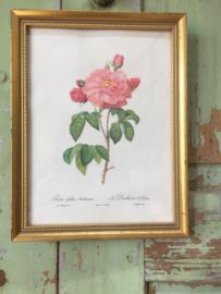 Oud goudkleurig lijstje met roos