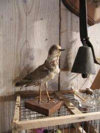 Brocant vogeltje