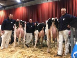 Hoftijzer Holsteins Zwartewaal