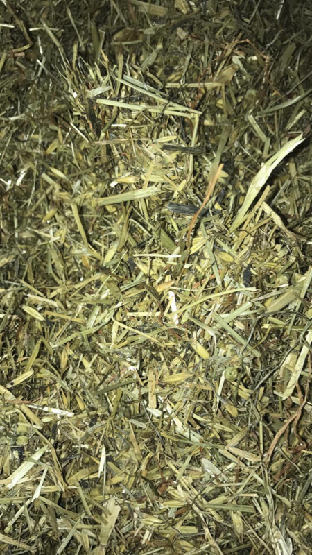 Hooi & Grassoorten | Groene haver | Laag in eiwit | haver en toch granenvrij | 800 gram