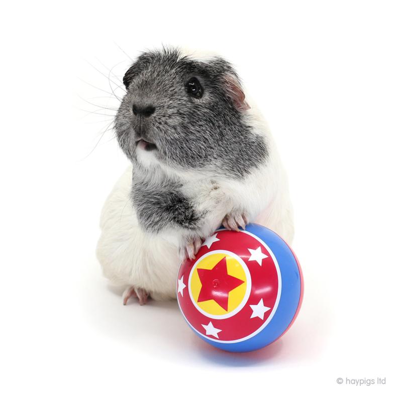 HayPigs!® Circus Treat Ball™ -  | 3 in 1 verrijkings  voer bal