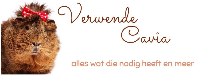 Cavia - alles wat je nodig hebt - de webwinkel van Caviaflat.nl