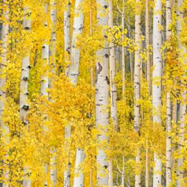 Landscape Medley - Aspen Leaves Gold
