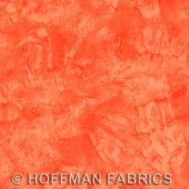 Hoffman 1895 596 November