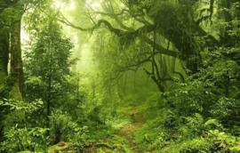 Batik Charmpack : Jungle