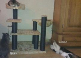 Faith, Nicky en Gizmo op een zelfsamengestelde krabpaal.