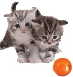 PETSTAGES ORKA BALL WITH BELL