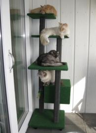 Boris, Don, Polina en Shiva
