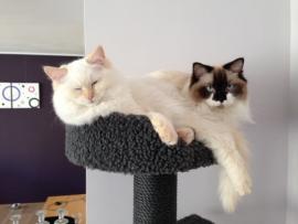Zusje en Lily