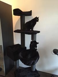 2 kattenvriendjes