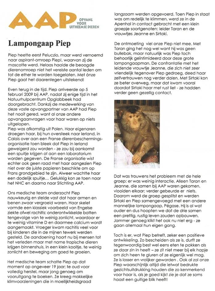 AAP-piep1.jpg