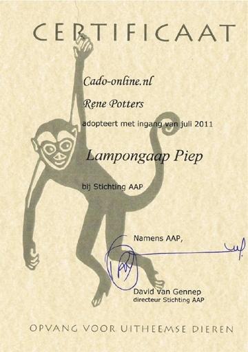AAP-piep2-.jpg