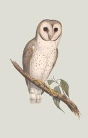 Kaart Ansichtkaart Uil - Owl