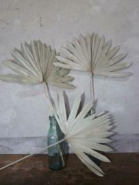 Gedroogd Palmblad Palm Blad Sun Speer Naturel 3st.