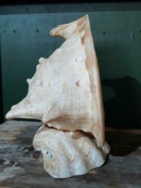 Oude Grote Schelp Schelpenlamp Hoornschelp