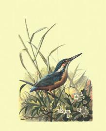Poster IJsvogel - Kingfisher