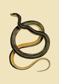 Kaart Ansichtkaart Slang - Snake